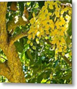Under The Shower Tree Metal Print