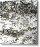 White Birch Bark Metal Print