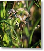 White Peacock Butterfly No 1 Metal Print