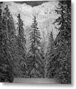 Winter Evening At Longmire - Monochrome Metal Print