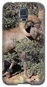 Bighorn Ram Galaxy S5 Case by Richard Lynch