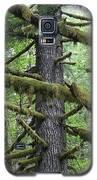 Moss Fir Galaxy S5 Case by Dylan Punke