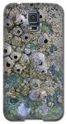 Tidal Pool 4 Galaxy S5 Case by Megan Dirsa-DuBois