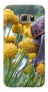 Brown Garden Snail Galaxy S6 Case by Walter Klockers