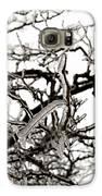 Ice On Branches Galaxy S6 Case by Blink Images