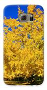 Autumn Colors Gingko Tree  Galaxy S6 Case