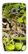 Baby Woodcock Galaxy S6 Case by Thomas Pettengill