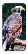 Beautiful Bald Eagle Galaxy S6 Case by Jason Brow