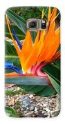 Bird Of Paradise Galaxy S6 Case by Bruce Kessler