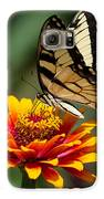 Butterfly Delight Galaxy S6 Case