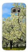 Cherry Blossoms Galaxy S6 Case by Thomas Pettengill