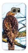 Hawk Love Galaxy S6 Case