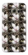Here Kitty Kitty Close Up 25 Galaxy S6 Case by Andee Design