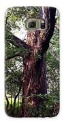King Of The Timberline Galaxy S6 Case by Garren Zanker