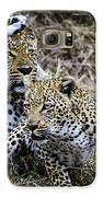 Leopard Tease Galaxy S6 Case by David Yack