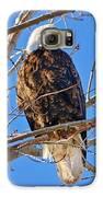 Majestic Bald Eagle Galaxy S6 Case