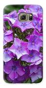 Purple Royale Galaxy S6 Case by Kimberly Ayars