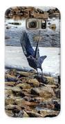 Raven Departs Galaxy S6 Case