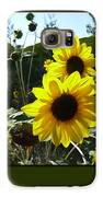 Song Of The Sunflower Galaxy S6 Case