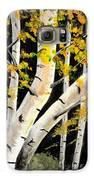 Spring Birch Galaxy S6 Case by Doreen Kirk