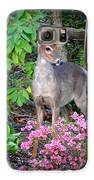 Spring Deer Galaxy S6 Case by Crystal Joy Photography