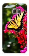Swallowtail Beauty  Galaxy S6 Case