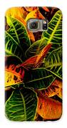The Tropical Croton Galaxy S6 Case by Lisa Cortez