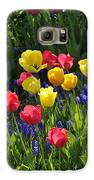 Tulips And Grape Hyacinths Galaxy S6 Case