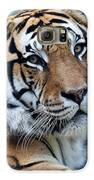 Bengal Galaxy S6 Case by Elizabeth Hart