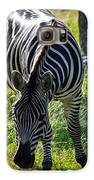 Zebra At Close Range Galaxy S6 Case by Kelly Rader