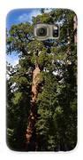 Yosemite Sequia Galaxy S6 Case by Atul Daimari