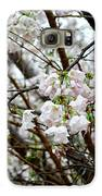 Blooming Apple Blossoms Galaxy S6 Case by Eva Thomas