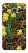 Daffodils With A Purple Flower Galaxy S6 Case