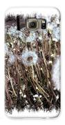 Dandelion Wishes Galaxy S6 Case by Myrna Migala