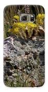 Lanceleaf Stonecrop Sedum 1 Galaxy S6 Case by Roger Snyder