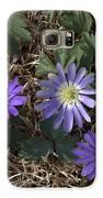 Purple Yard Flowers Galaxy S6 Case by Liz Allyn