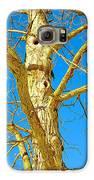 Strange Tree Galaxy S6 Case