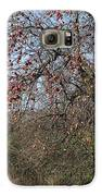 The Apple Tree Galaxy S6 Case by Danielle Allard