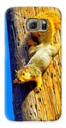 To Squirrels And To Me Galaxy S6 Case by Guy Ricketts