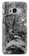 Birch Tree Galaxy S8 Case