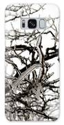 Ice On Branches Galaxy S8 Case