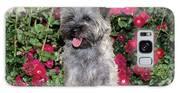 1990s Cairn Terrier Dog Standing Galaxy S8 Case