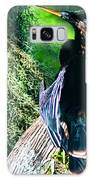 Anhinga On A Cyprus Galaxy S8 Case