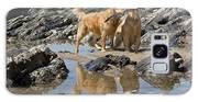 Two Golden Retrievers Playing Galaxy S8 Case