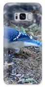 Blue Jay Galaxy S8 Case