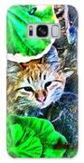 A Curious Cat Galaxy S8 Case