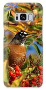 American Robin Galaxy S8 Case