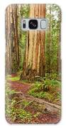 Ancient Forest - The Massive Giant Redwoods Sequoia Sempervirens In Redwood National Park. Galaxy Case
