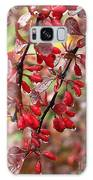 Autumnal Little Wonders_2 Galaxy S8 Case