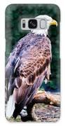 Beautiful Bald Eagle Galaxy S8 Case